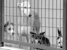 El Centro de Acogida de Animales de Compañía no cierra en verano