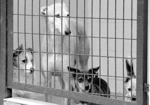 perros_abandonados.jpg