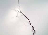 Racionalitat orgànica - Cristina Almodóvar (1)