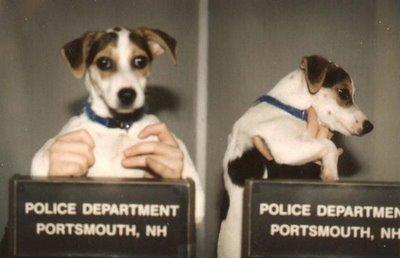 dog jobs