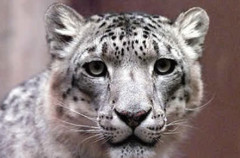 Snow Leopard, Mac OS X 10.6