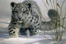 Cerrado el desarrollo de las APIS para Snow Leopard