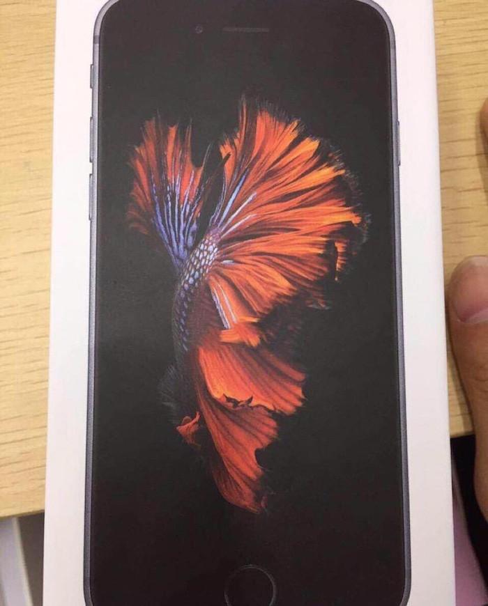 iPhone6scaja3