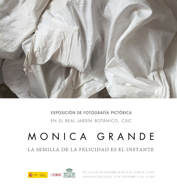 Monica Grande Expo