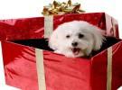 Las mascotas, un regalo diferente