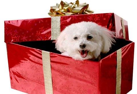 las mascotas un regalo diferente