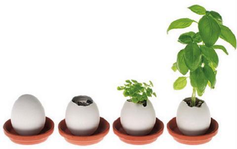 Manualidades con niños: Plantas en cáscaras de huevo