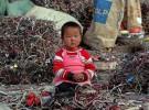 115 millones de niños hacen aún trabajos peligrosos