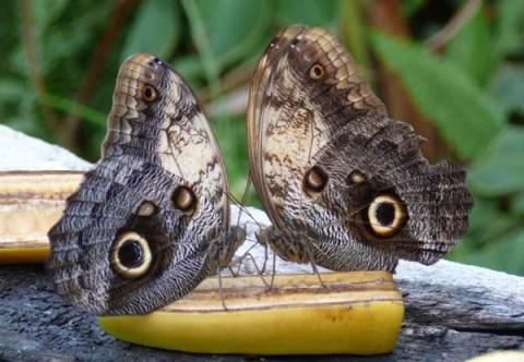 buterflies center en girona o el hogar de las mariposas