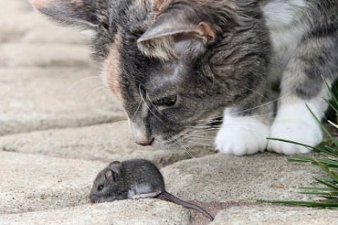 poesia infantil gatos, gatos y gatos