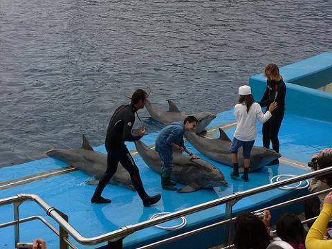 Delfinoterapia en el Oceanogràfic de Valencia