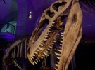 Exposición de dinosaurios en Córdoba