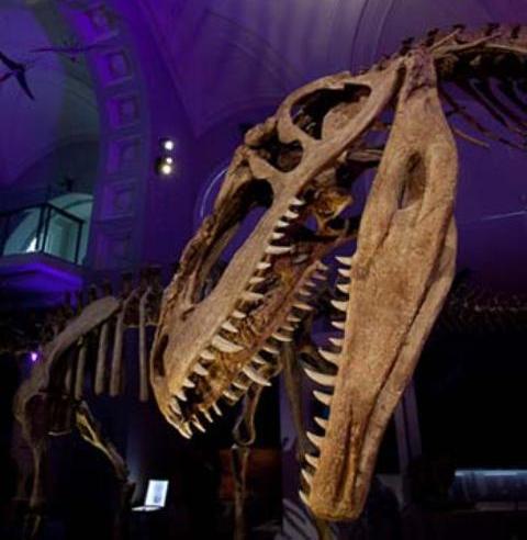 exposicion de dinosaurios en cordoba