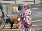 Uso del casco en bicicleta (II)