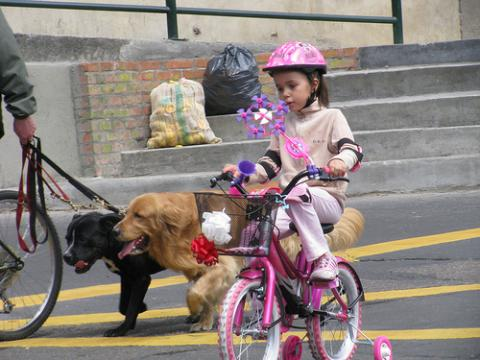 biciclata