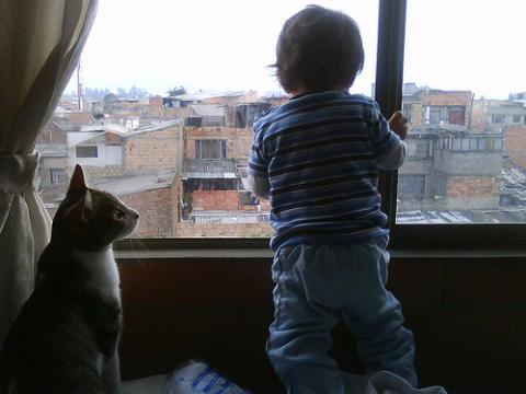 Cuando un gato araña a nuestros hijos