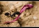 Insectos como mascotas