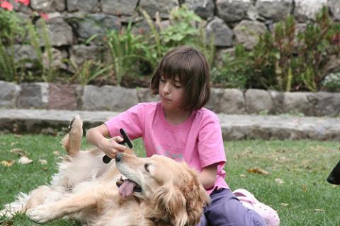 Como cuidar a tu perro (I)