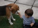 Celos entre perros y niños
