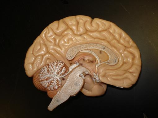 El cerebro del hijo se modifica con la depresión de su madre