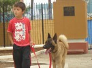Relación entre el asma y las mascotas