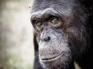 Viajar con niños: Centro de Recuperación de Primates
