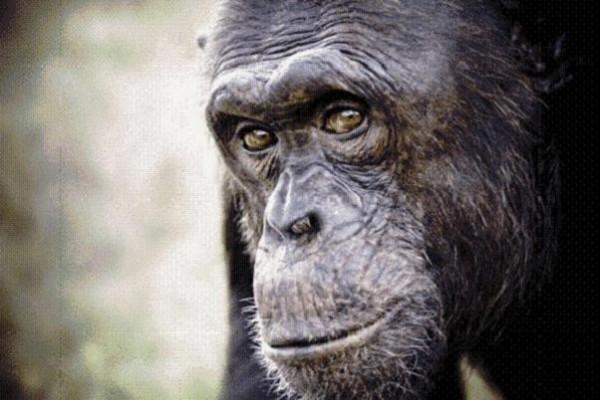 Fundación Mona facilita la visita a sus primates