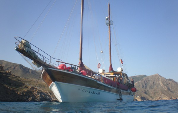 Navegar con delfines en Mazarrón