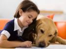 Perros que ayudan a los niños a no tener miedo al hospital