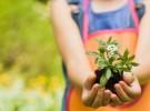 Las mejores plantas para los niños