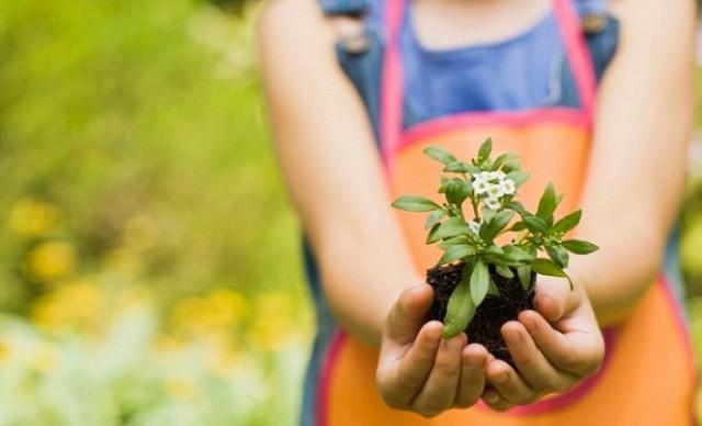Plantas para los niños
