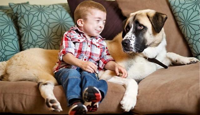 Supera el miedo a través de su perro