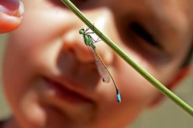 niños campo insectos