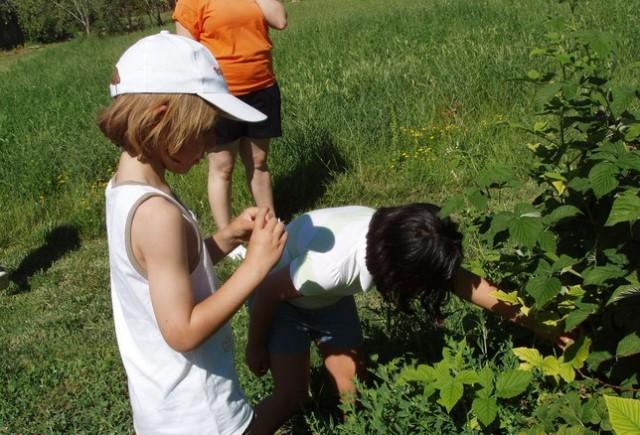 niños campo intoxicacion plantas