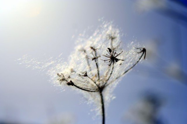 Tratamientos de alergia