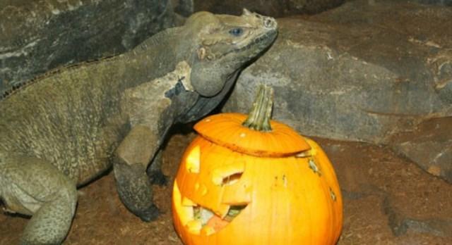 Halloween en el zoo aquarium de madrid