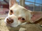 Un perrito que ayuda a los niños con trastornos de sueño
