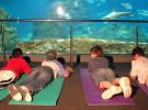 Actividades infantiles con tiburones en L'Aquàrium de Barcelona