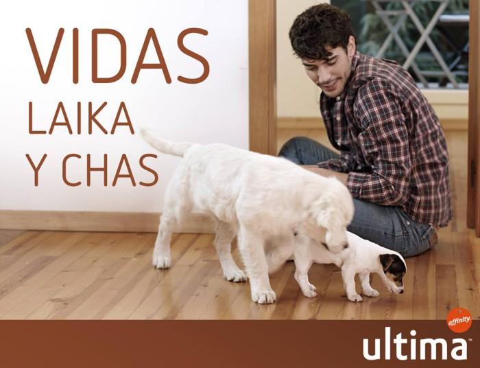 Cuida al perro de la familia con Ultima de Affinity