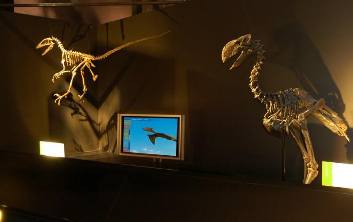 museo paleontologico de teruel
