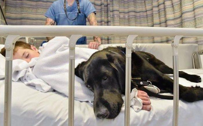 Mahe: la perra que es cuidadora y terapeuta de su pequeño dueño