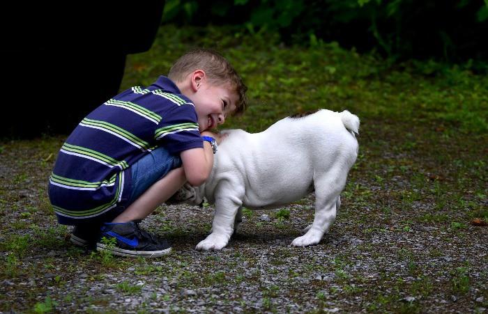 terapia perros y autismo
