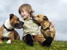 Niños y animales: Los Perros (I)