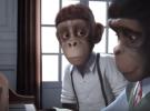 Educar en valores: Sinfonía de monos