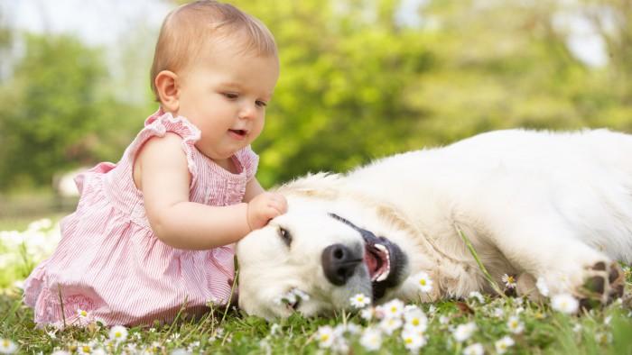 La muerte de un perro