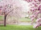 Poesía infantil: La primavera besaba
