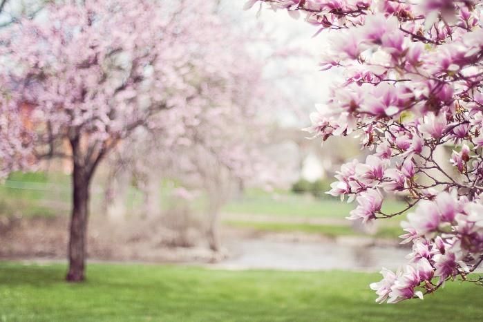 poema: la primavera besaba