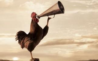 Poesía infantil: El Gallo Despertador