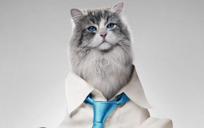 siete vidas este gato es un peligro