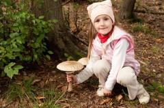 Consejos para coger setas, en otoño, con los niños